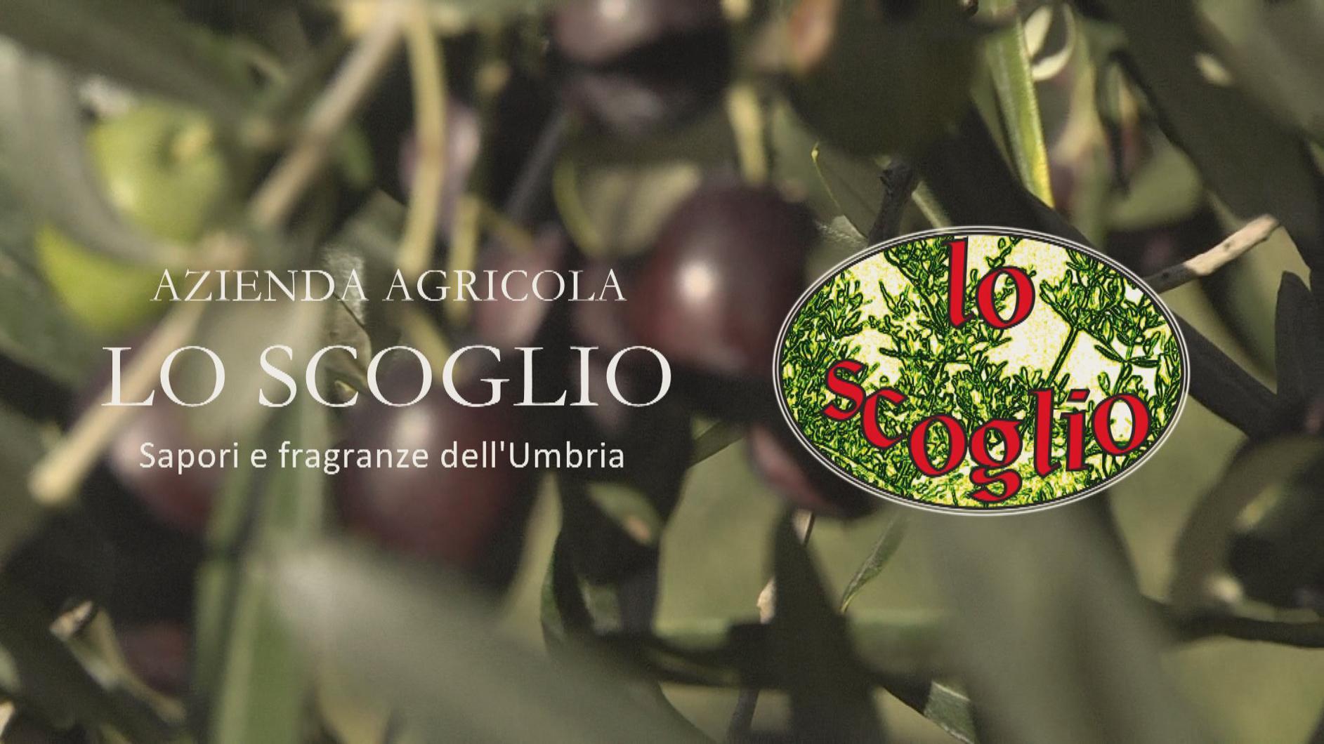 Azienda Agricola - Olio lo Scoglio