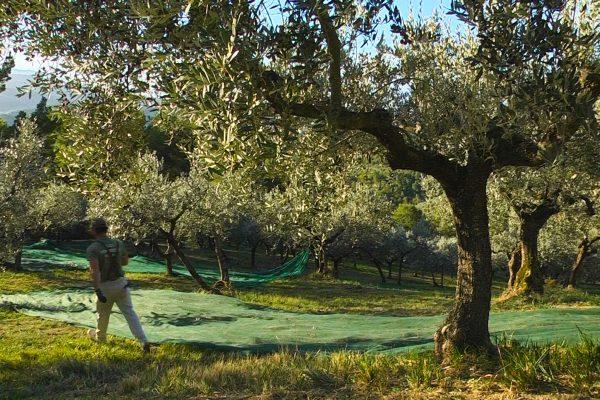 Azienda Agricola - Lo Scoglio
