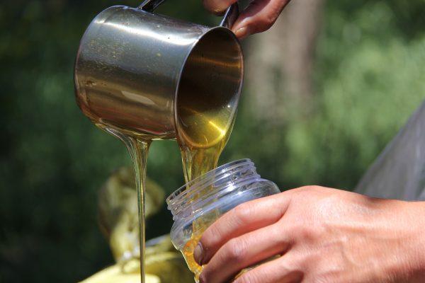 honey-2167848_1920