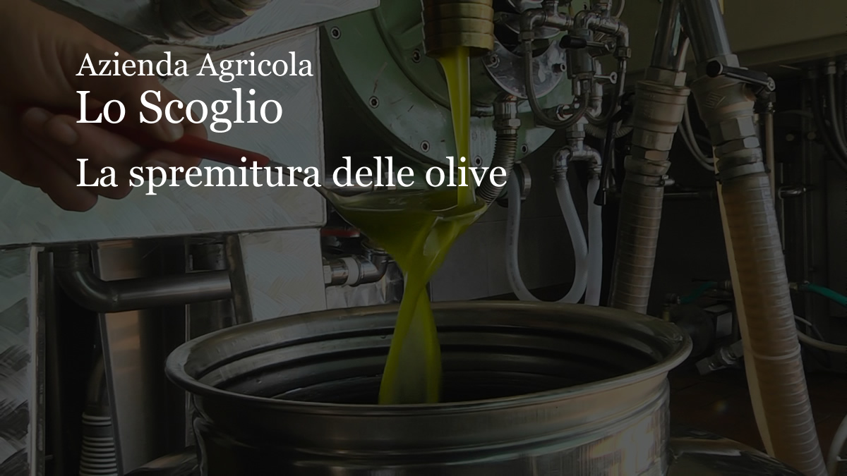 Prodotti della azienda Azienda Agricola Olio Lo Scoglio - La spremitura