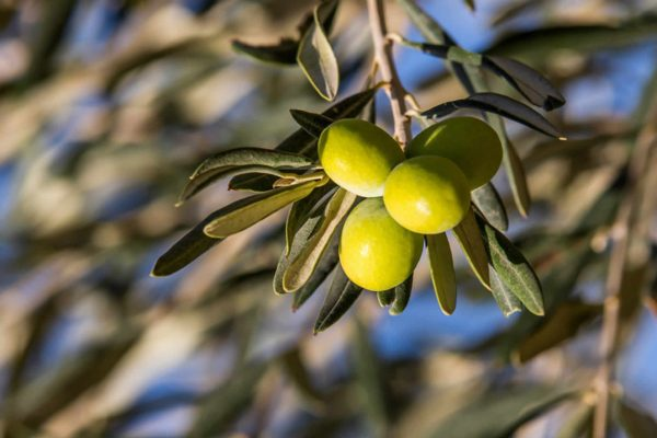 Olio extra vergine d'oliva lo scoglio